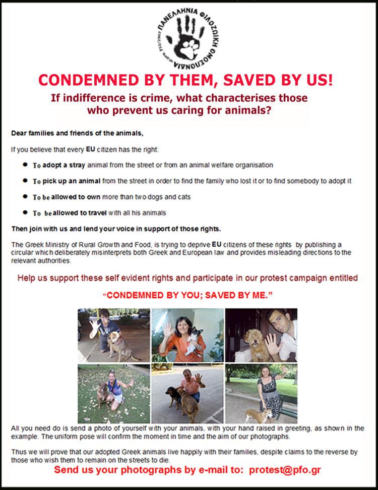 Halkida Dog Shelter News